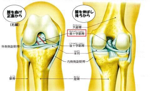 前 靭帯 膝 損傷 十字 右